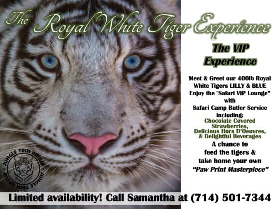 Lilly and Blue Royal White Tigers